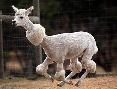 Стрижка овец от Одесского губернатора или «совок» нового образца