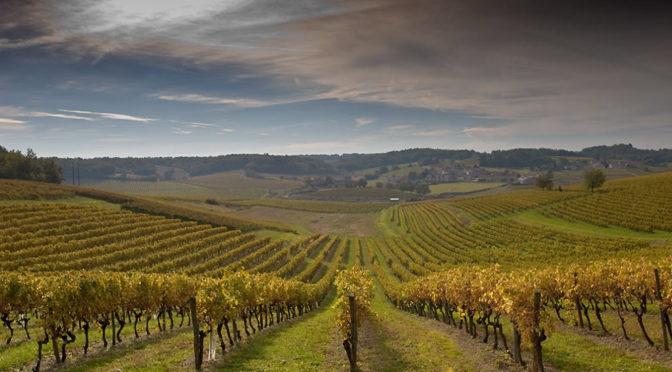 В Одесской области создадут специализированный земельный кадастр с целью развития виноградарства