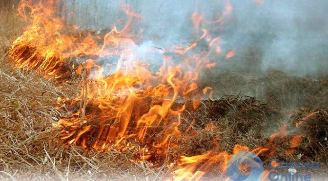 За сутки в Одесской области пожары уничтожили 9,3 га травы и посевов